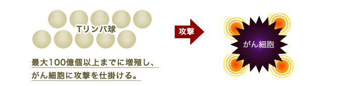 活性化Tリンパ球