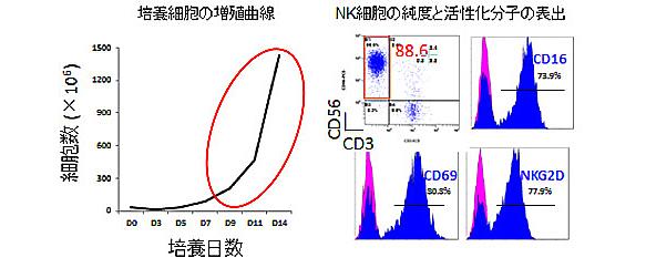 NK細胞活性